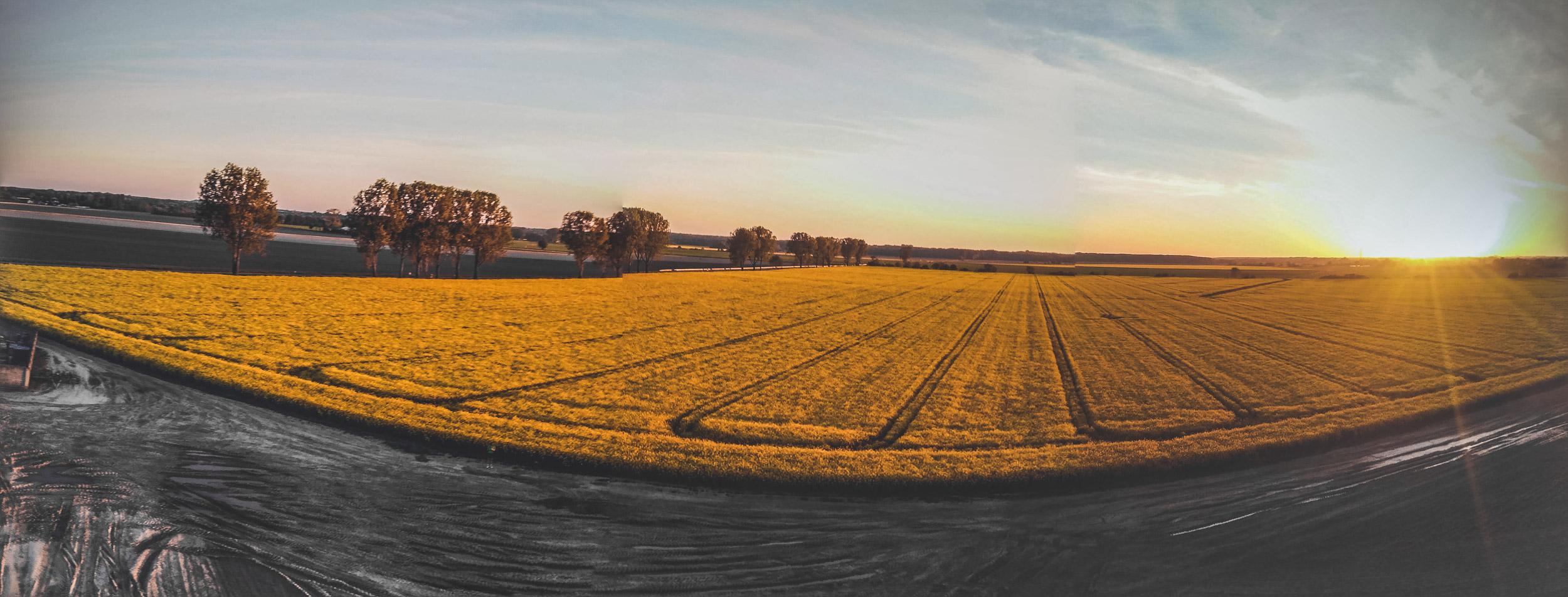 dobby drone panorama